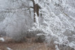 Leinwanddruck Bild - Raureif an Ästen einer Hecke