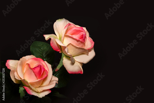Yellow red roses with black background