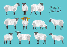 Sheep Vector Set Flock Group W...