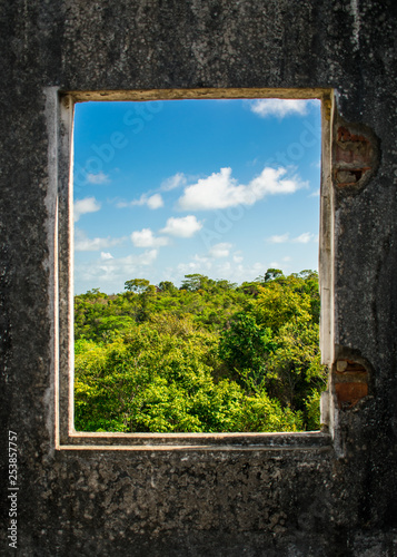 Fotografia  A view of the Atlantic forest through a window of an abanoned house - Itamaraca