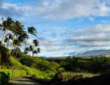 Hiking Path With Palm Trees And Mountains On The Big Island Of Hawaii.
