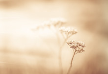 Sepia Natural Background With ...