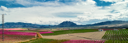 Cropped image horizontal view orchards in bloom. Spain