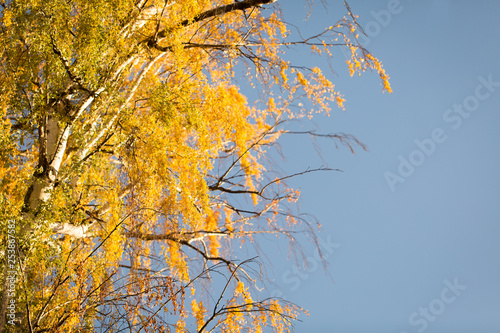 Yellow tree against blue sky