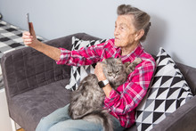 Old Person Usestechnology. Mature Contented Joy Smile Active Gray Hair Caucasian Wrinkles Woman Sitting Living Room Couch With Fluffy Cat Using Mobile Phone, Video Call, Front Selfie Camera Hand