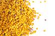 Leinwandbild Motiv Pellets of Yellow Bee Pollen