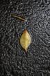 Fallen Leaf on a wet road