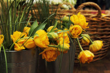 Yellow Flowers Peonies In A Bucket, Beautiful Bouquets, Raindrops And Dew, Background