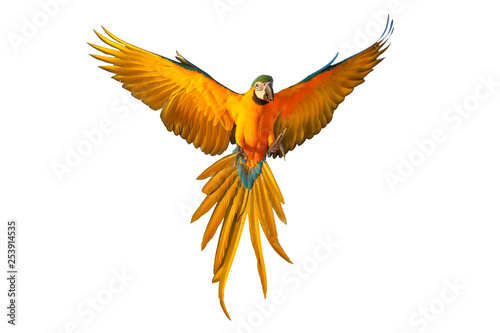 Photo  Colorful flying parrot isolated on white