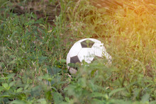 Abandoned Old Football Or Soccer Ball In The Fieldgrass Not Available