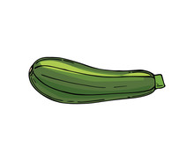 Icon Of Fresh Green Zucchini. Ripe And Healthy Vegetable. Organic Food. Natural Farm Product. Vegetarian Nutrition.