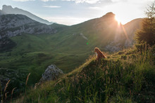 Dog In The Mountains Is Standing On A Rock And Looking At Nature. Travel With A Pet. Nova Scotia Duck Tolling Retriever Happy, Healthy Lifestyle, Adventure
