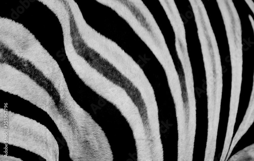 In de dag Zebra Zebra print design and seamless pattern in black and white and colors