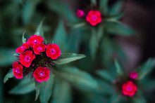 Red Flowers On Green Background. Spring Flower.