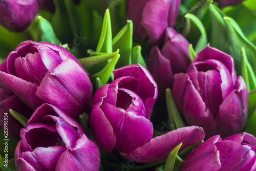 Poster Tulp Spring Tulips Background. Close-up. Flat Lay