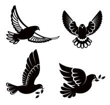 Pigeon Or Dove, White Bird Fly...