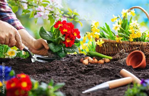 In de dag Hoogte schaal Planting spring flowers in the garden