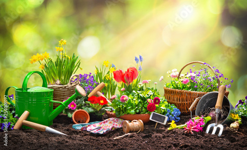 Obraz na plátně Planting spring flowers in the garden