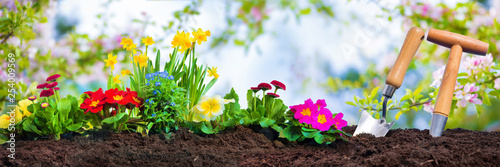 Canvas-taulu Planting spring flowers in sunny garden