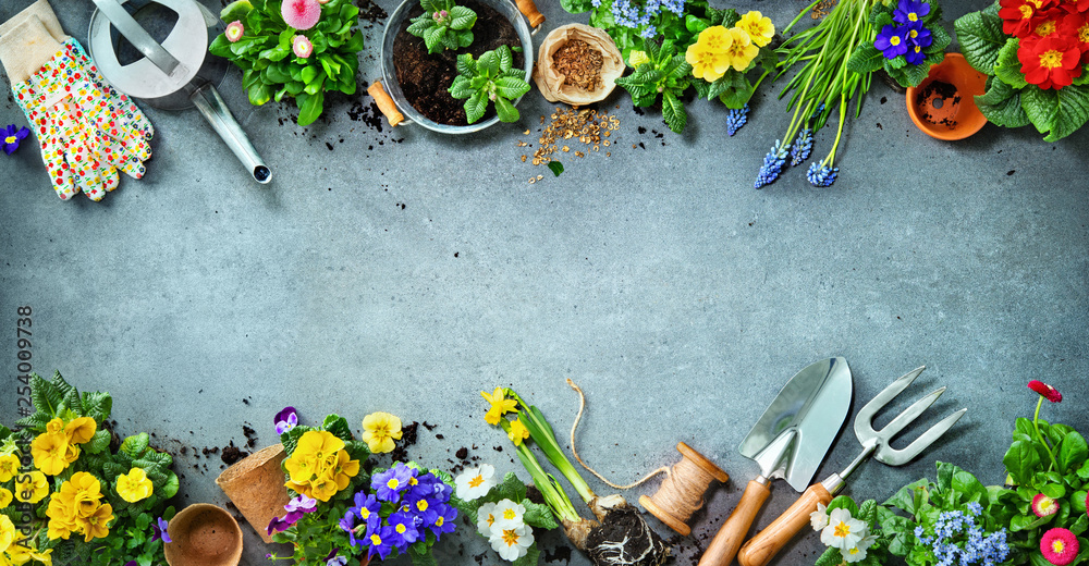 Fototapety, obrazy: Gardening tools and spring flowers on the terrace