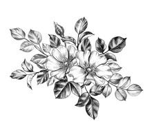 Hand Drawn Dog-Rose Flowers