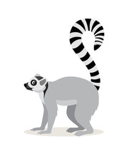 African Animal, Cute Lemur With Striped Long Tail Icon Isolated On White Background, Vector
