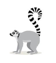 African Animal, Cute Lemur Wit...