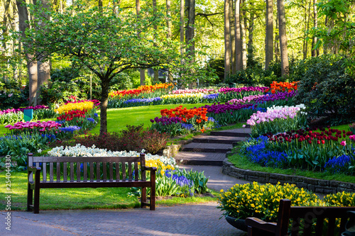 Fototapeta Tulip bloom in Keukenhof Flower Garden, the largest tulip park in the world. Colorful blooming fields and flower alleys, The Netherlands, Holland, Lisse, Europe.  obraz