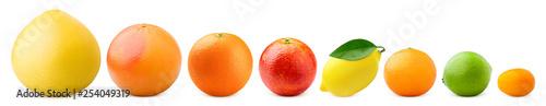 citrus isolated on white background, pomelo, grapefruit, orange, lemon, tangerine, lime, kumquat, clipping path - 254049319