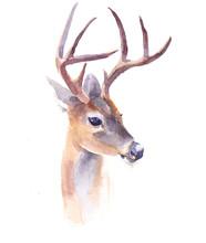 Watercolor Deer Forest Animal ...