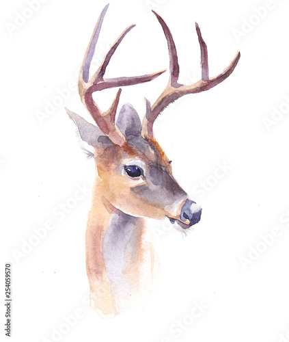 watercolor-deer-forest-animal-illustration-isolated-on-white-background