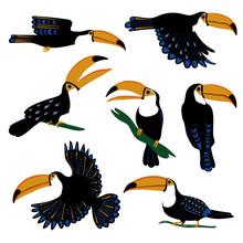 Set Of Tropical Toucan Birds.