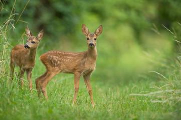 Mladi jeleni