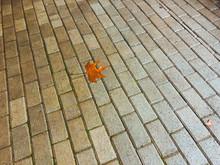 Autumn Fallen Leaf On The Decorative Gray Concrete Bricks. Close-up Shot