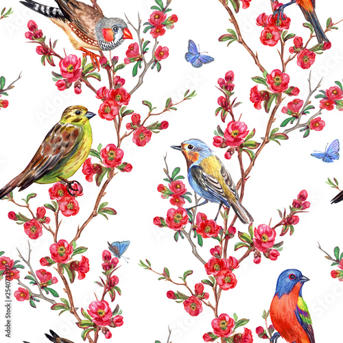 Poster Parrot Seamless pattern of birds and quince blossoms on a white background, spring print for fabric, background for different designs.