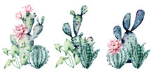 Watercolor Blooming Pink Cactus And Green, Blue Cacti Set, Hand Drawn Flowers Illustration. Perfect For Design Stickers, Icons,  Greeting Card, Blog, Banner. Isolated On White.  Cacti Collection.