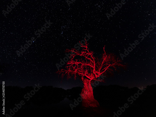 Pinturas sobre lienzo  Night landscape with dry tree illuminated red