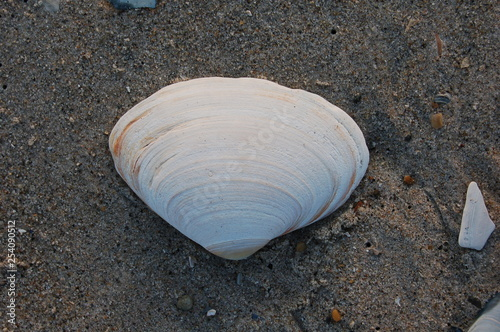 Fotografia, Obraz  shell on the beach
