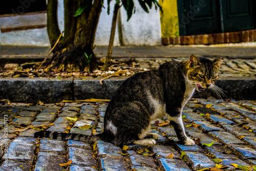 Photo  Street cat
