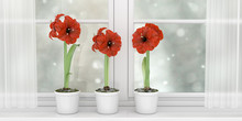 Three Pots With Red Poppies Standing On The Window Sill Of A Wide White Window, 3d Illustration