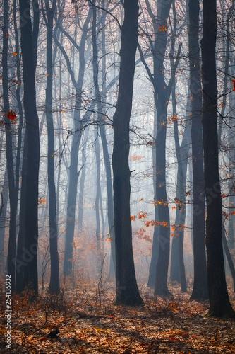 Droga w dębowym lesie w jesień czasie w mgłowym dniu