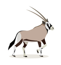 African Animal, Cute Oryx Antelope, Gazelle Isolated On White Background, Vector