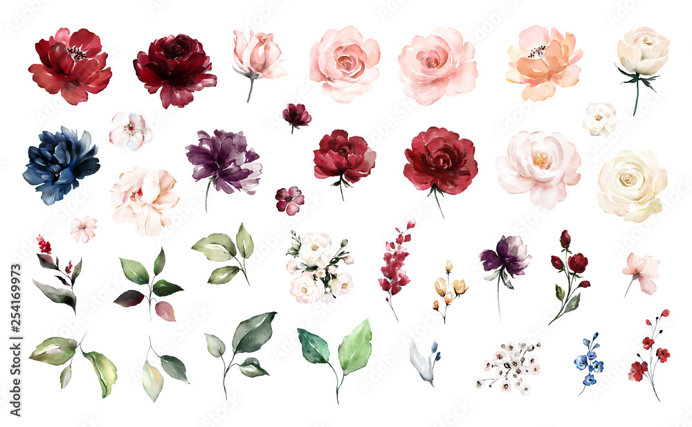 Fototapeta Set watercolor elements of roses collection garden red, burgundy flowers, leaves, branches, Botanic  illustration isolated on white background.