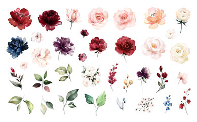 Set watercolor elements of roses collection garden red, burgundy flowers, leaves, branches, Botanic  illustration isolated on white background.