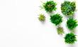 Leinwandbild Motiv Various green plants in pots on white background