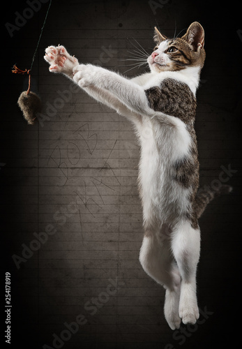 Garden Poster Cat Bob Kat