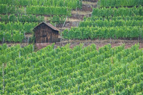 Fotografía  Weinbergsterassen mit Hütte