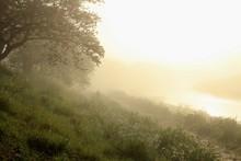 朝の神秘的な風景