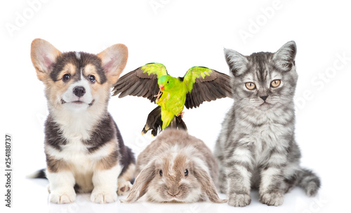 Group of pets together in front view. Isolated on white background © Ermolaev Alexandr