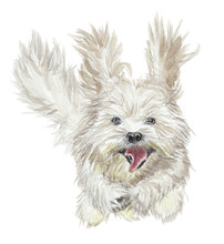 Watercolor Illustration - Funny Running Dog - Bichon Havanais Figure